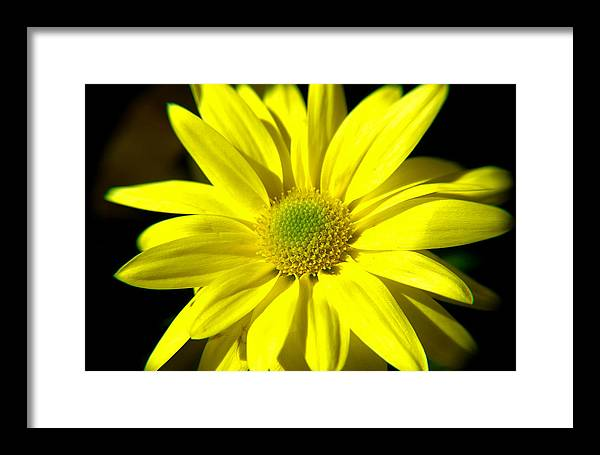 Bright Framed Print featuring the photograph Bella Linda II by Patricia Trudell