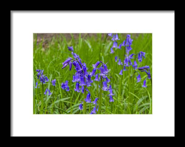 Woodland Framed Print featuring the photograph Bells In The Grass by Trevor Kersley