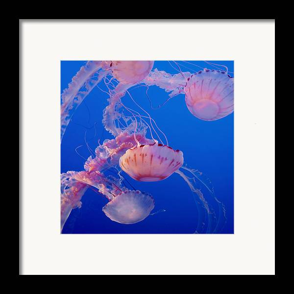 Submerge Framed Print featuring the photograph Below The Surface 3 by Jack Zulli