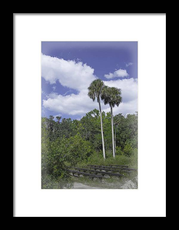 Trees Framed Print featuring the photograph Benched At Rainbow Springs Campground by Judy Hall-Folde