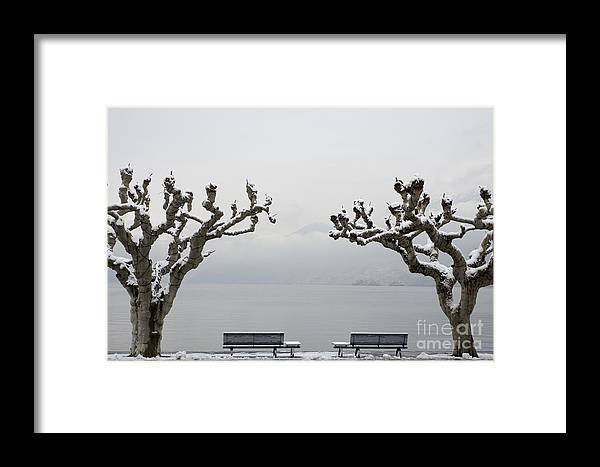 Benches Framed Print featuring the photograph Benches And A Trees by Mats Silvan