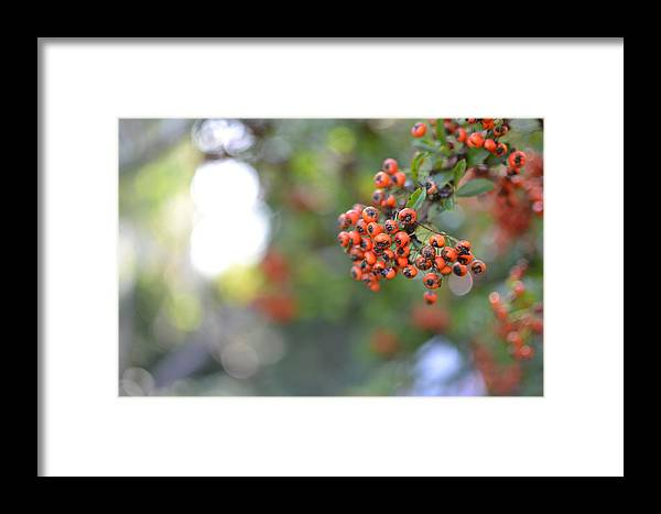 Plant Framed Print featuring the photograph Berries by Peter Endrody