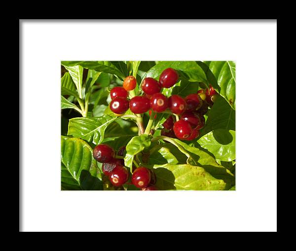 Framed Print featuring the photograph Berry Berry by Pepsi Freund