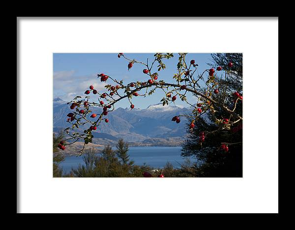 Berries Framed Print featuring the photograph Berry Good View by Jenny Setchell