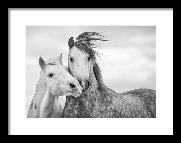 Horse Framed Print featuring the photograph Best Friends I by Tim Booth