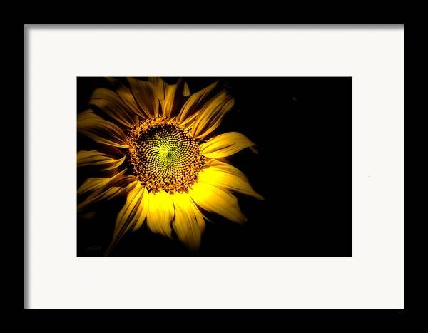 Sunflower Framed Print featuring the photograph Between Here And There by Bob Orsillo