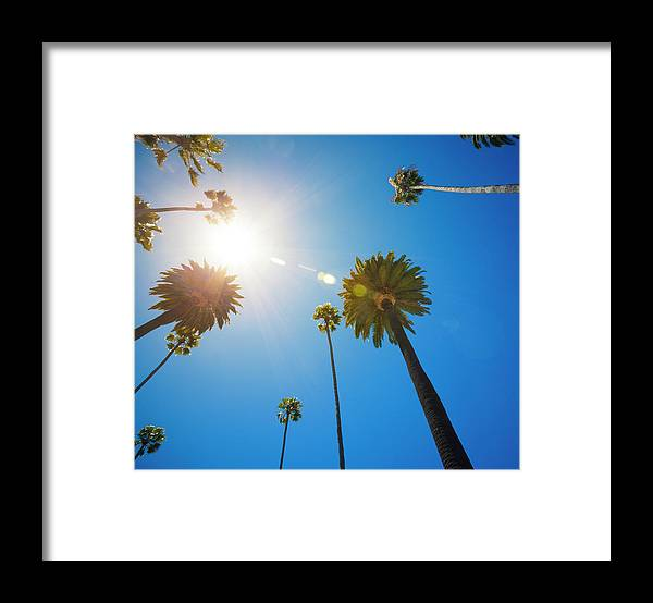 Beverly Hills Framed Print featuring the photograph Beverly Hills Palm Trees by Lpettet