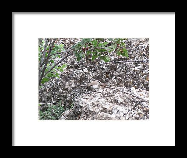 Aimee Mouw Framed Print featuring the photograph Bewick's Wren On The Canyon Wall by Aimee Mouw