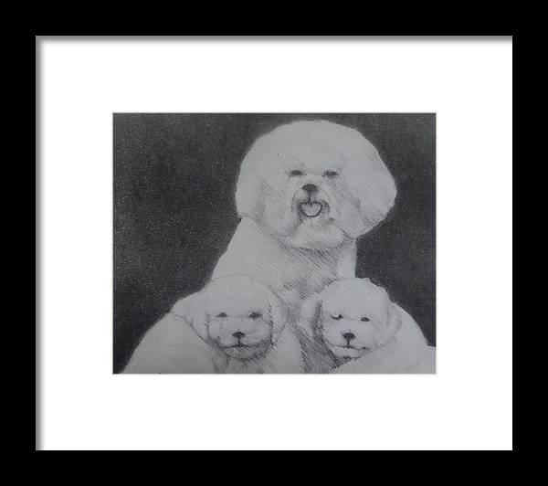 Dogs Framed Print featuring the drawing Bichon family by Myke Irving