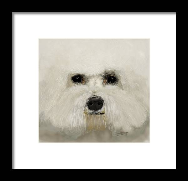 Bichon Frise Framed Print featuring the drawing Bichon Frise by Myke Irving