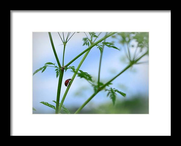 Ladybug Framed Print featuring the photograph Big World by Jolie Bell