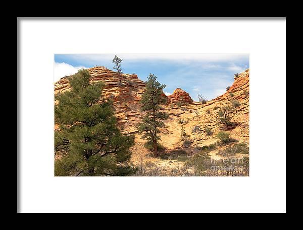 Bighorn Sheep Framed Print featuring the photograph Bighorn Sheep On A Ridge by Robert Bales