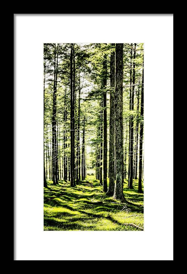 Birch Framed Print featuring the photograph Birch Forest Fractal by Weston Westmoreland
