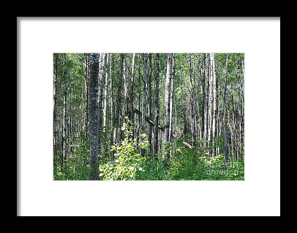 Abstract Framed Print featuring the photograph Birch Forest by Mark McReynolds