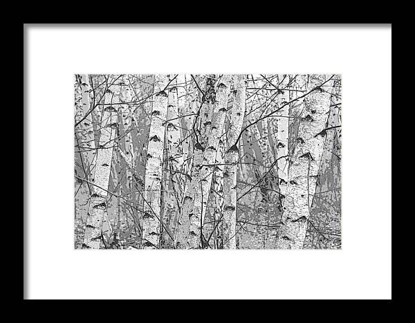 Pixels Framed Print featuring the photograph Birch Forest by Rob Huntley