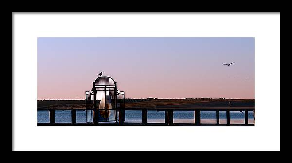 Cape Cod Framed Print featuring the photograph Bird Gate by David DeCenzo