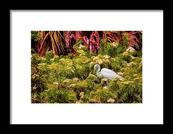 White Bird Framed Print featuring the photograph Bird In The Blooms by Lewis Mann