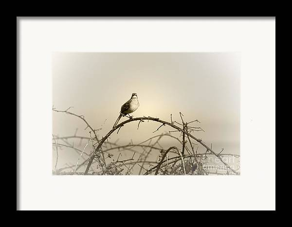 Songbird Framed Print featuring the photograph Bird In The Briar by Artist and Photographer Laura Wrede