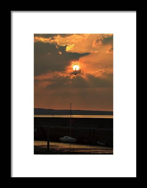 Tony Reddington Framed Print featuring the photograph Bird In The Sun by Tony Reddington