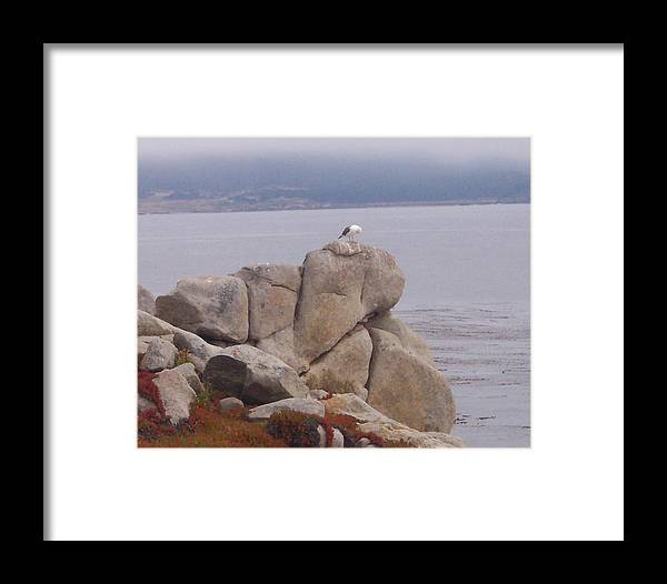 Bird Framed Print featuring the photograph Bird On A Rock by Pharris Art