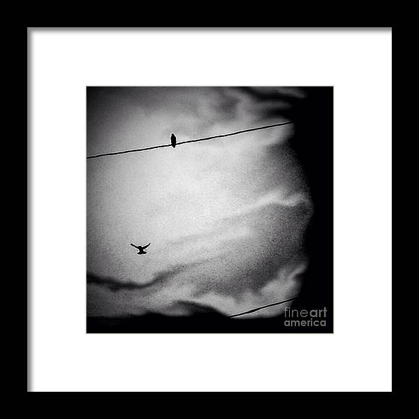 Bird Framed Print featuring the photograph Bird On A Wire by Candace Rowlands