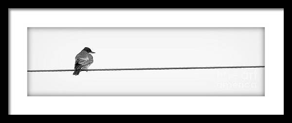 Bird Framed Print featuring the photograph Bird On A Wire by Rob Andrus