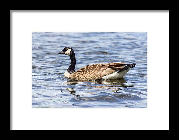2013 Framed Print featuring the photograph Bird Profile by Terry Thomas