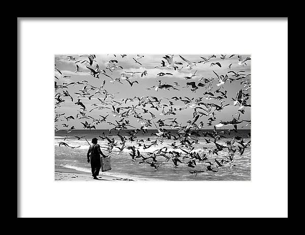 Birds Framed Print featuring the photograph Birds Birds by Liesbeth Van Der