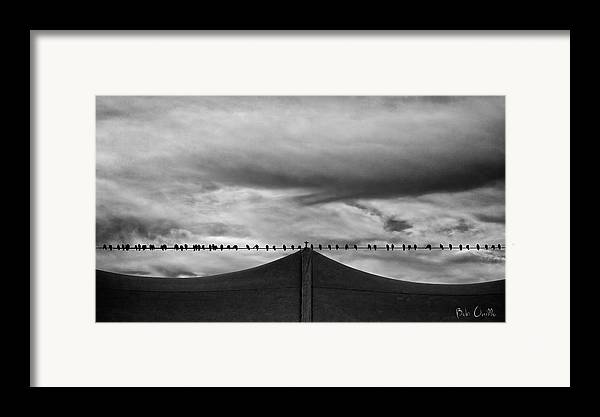Animal Framed Print featuring the photograph Birds by Bob Orsillo