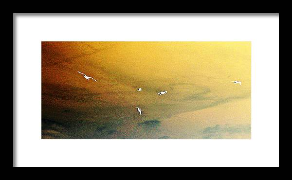 Computer Graphics Framed Print featuring the photograph Birds In Flight Posterized by Marian Bell