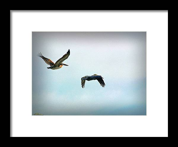 Coastal Scene Framed Print featuring the photograph Birds Of A Feather by Phil Mancuso
