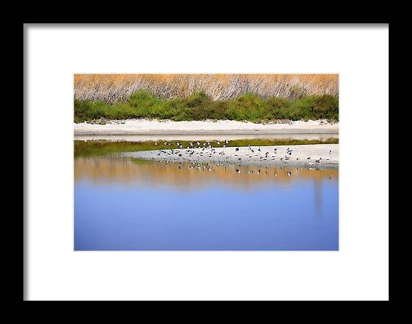River Framed Print featuring the photograph Birds On The River Bank by Diego Re