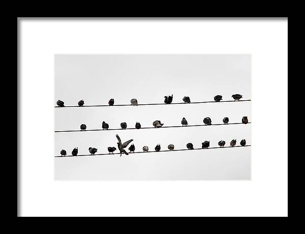 Amazon Rainforest Framed Print featuring the photograph Birds Pattern by Ricardo Lima
