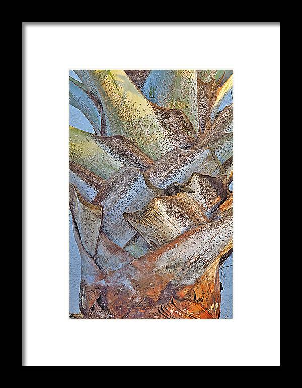 Palm Tree Framed Print featuring the photograph Bismark Palm Tree Weave by Brooke Trace