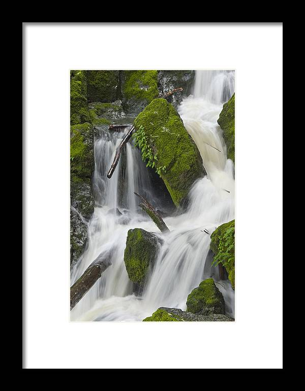 Mount Tamalpais Framed Print featuring the photograph Bits Of The Forest In A Mount Tam Cascade by Scott Lenhart