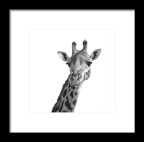 Africa Framed Print featuring the photograph Black And White Giraffe by Deborah Benbrook
