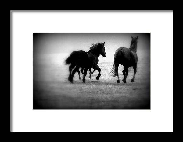 Horse Framed Print featuring the photograph Black And White Horses by Lori Reeths