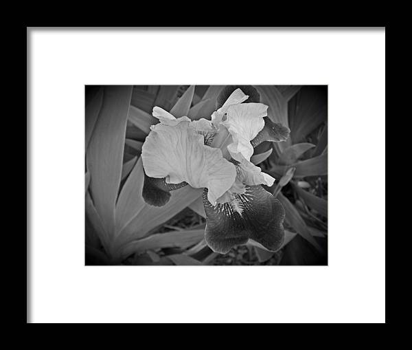 Framed Print featuring the photograph Black And White Iris by Regina McLeroy