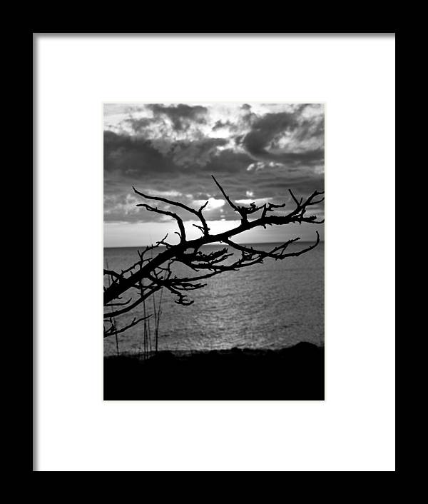 Swflsunsetscenery Framed Print featuring the photograph Black And White Tree by Tracy Barnard