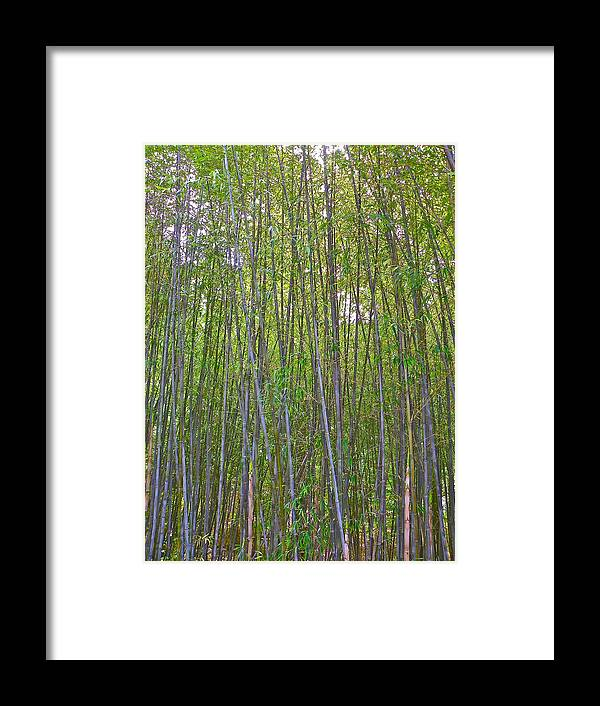 Bamboo Framed Print featuring the photograph Black Bamboo Heights by Eve Spring