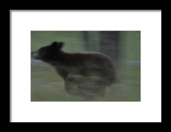 Black Bear Framed Print featuring the photograph Black Bear Cub Running by Frank Madia