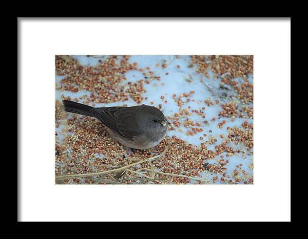 Bird Framed Print featuring the photograph Black Eyed Junco by Bonfire Photography