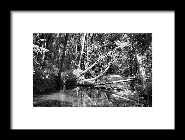 Bird Framed Print featuring the photograph Black Reflected by Art Dingo
