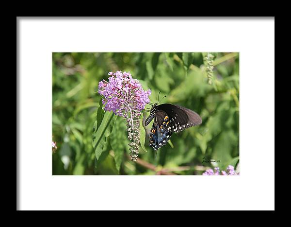 Sooc Framed Print featuring the photograph Black Swallowtail by Ericamaxine Price
