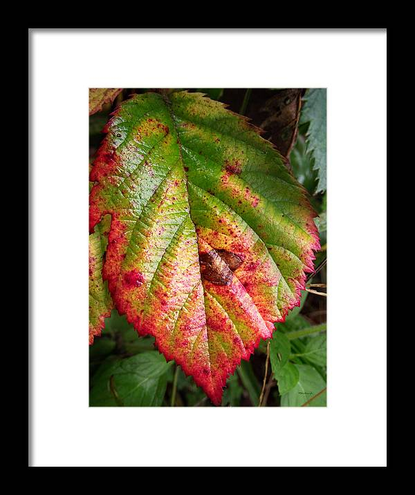 Duane Mccullough Framed Print featuring the photograph Blackberry Leaf In The Fall 4 by Duane McCullough