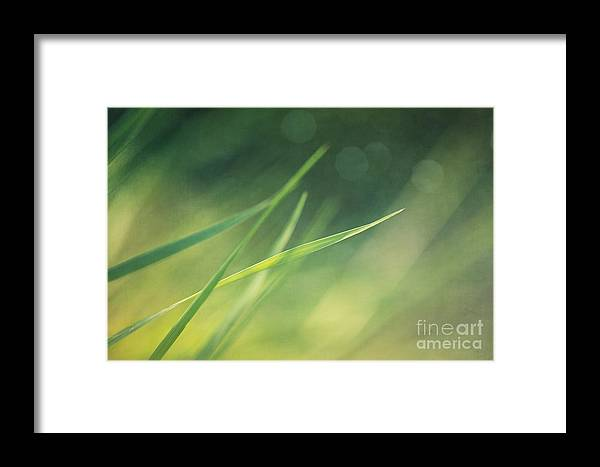 Grass Framed Print featuring the photograph Blades Of Grass Bathing In The Sun by Priska Wettstein