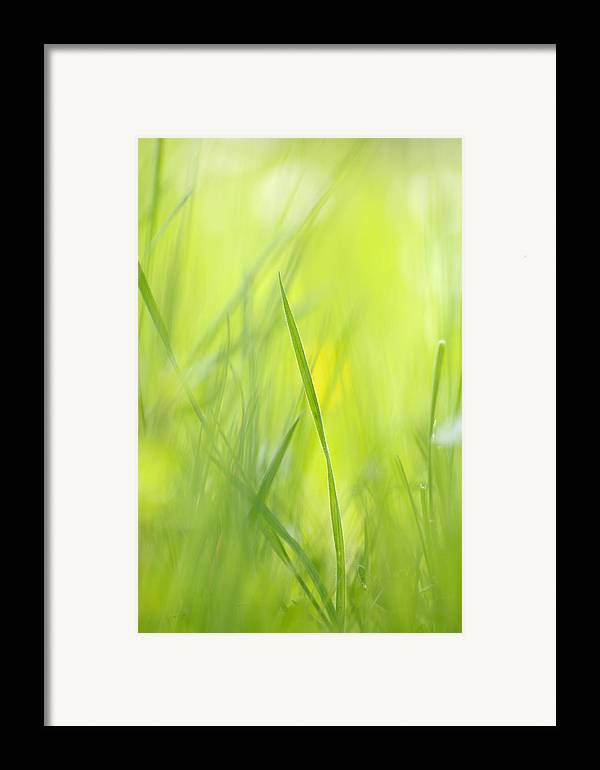 Spring Framed Print featuring the photograph Blades Of Grass - Green Spring Meadow - Abstract Soft Blurred by Matthias Hauser
