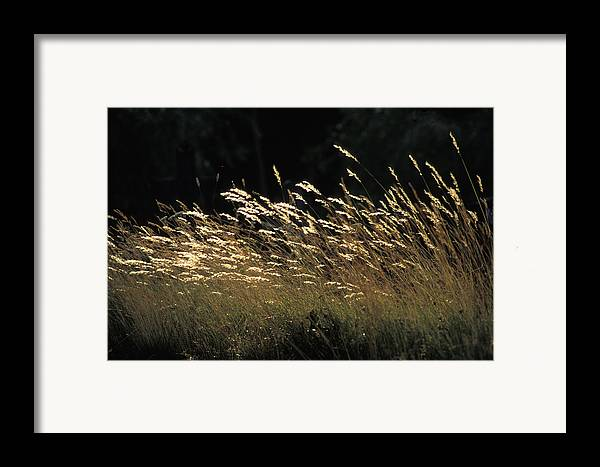 Photographic Framed Print featuring the photograph Blades Of Grass In The Sunlight by Jim Holmes
