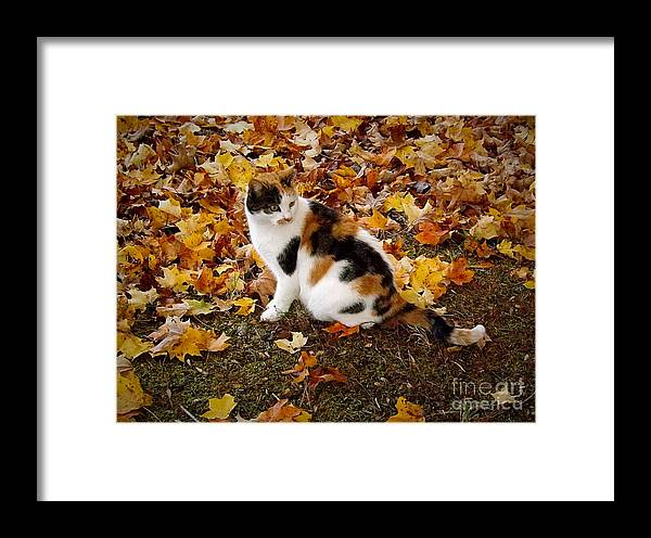 Cat Framed Print featuring the photograph Blending by Christy Ricafrente