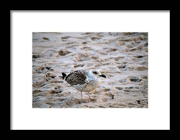 Seagull Framed Print featuring the photograph Blending In by Tommy Pics